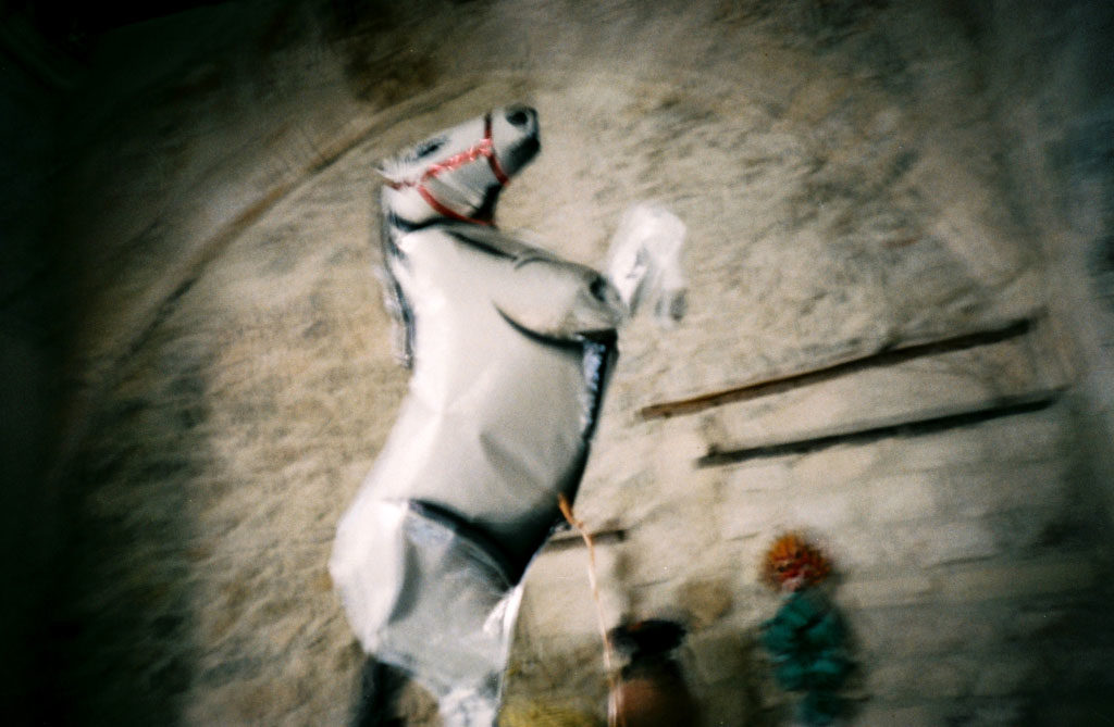 Cheval de Camargue - Arles -